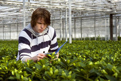 Checking plants Stock Photos