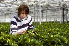 Checking plants stock photos