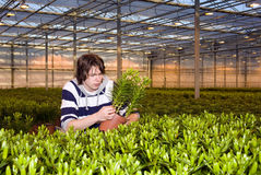 Checking plants Royalty Free Stock Photography