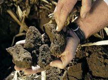 Checking the quality of soil royalty free stock photos