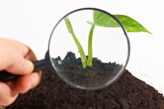 Checking small plant Stock Photos