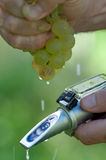 Checking The Sugar Contest Of Grape Stock Images
