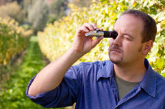 Checking The Sugar Contest Of Grape Royalty Free Stock Images
