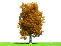 Chectnut in de herfst Stock Afbeelding