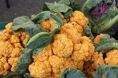 Chedar cauliflower, Brassica oleracea var. botrytis Royalty Free Stock Image