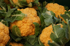 Cheddar cauliflower. Brassica oleracea var. botrytis, cultivar with golden yellow compact heads, rich in nutrients particularly betacarotenes and antioxidants stock images