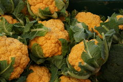Cheddar cauliflower. Brassica oleracea var. botrytis, cultivar with golden yellow compact heads, rich in nutrients particularly betacarotenes and antioxidants stock image