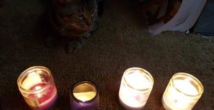 Kitty meditation in the city stock photos