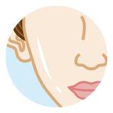 Cheek - Body Part. Cheek - Female Body Part. Vector Illustration Royalty Free Illustration