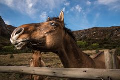 Horse checking out the camera. Cheeky brown horse checking out the camera Royalty Free Stock Photography