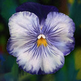 Cheeky Faced Blue Pansy - Digital Painting. Digital painting of a blue pansy flower Stock Images