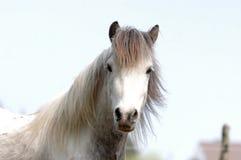 Cheeky looking pony Stock Photos