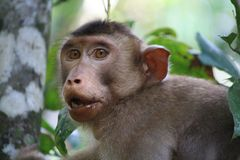 Cheeky Monkey Royalty Free Stock Images