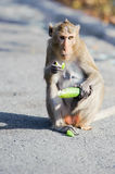Cheeky monkey sitting eating Royalty Free Stock Images