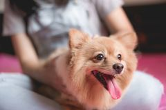 Cheerful asian young woman playing and happy fun with her dog Stock Photos