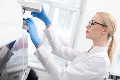 Cheerful assistant is working in laboratory Stock Photos