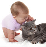 Cheerful babe with cat. Royalty Free Stock Photo