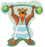 Cheerful bear raises the a heavy barbell Royalty Free Stock Images