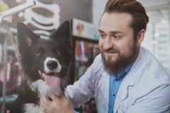 Cheerful bearded male veterinarian examining beautiful dog royalty free stock photography