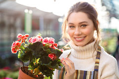 Cheerful beautiful woman florist holding flowering begonia Royalty Free Stock Photo