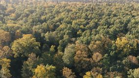 Aerial shot of the mixed green forest in the Carpathian Mountains on a sunny day. Cheerful bird`s eye view of a leafy and fir forest with many green trees below stock video