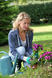 Cheerful blond woman gardening. Cheerful blond woman planting flowers in garden Royalty Free Stock Photos