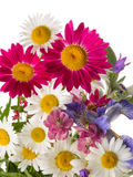 Cheerful bouquet Stock Photos
