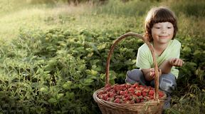 Cheerful boy with basket of berries royalty free stock photography