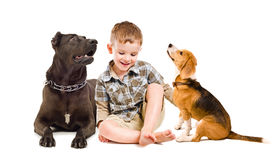 Cheerful boy sitting with two dogs Royalty Free Stock Images