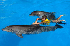 Cheerful boy swims with a dolphin Stock Photos