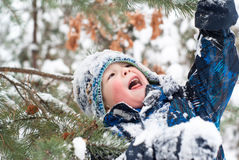 Cheerful boy among winter firs Stock Image