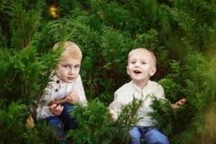 Cheerful brothers boys children green bushes, tree arborvitae Stock Photography