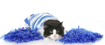Cheerful cat Stock Photography