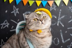 Cheerful cat in a cap on the background of the school board. Back to school. Education learn chalk lesson humor study student blackboard pet smart fun funny royalty free stock photos