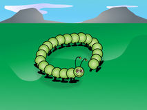 The cheerful caterpillar Stock Photos
