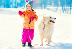 Cheerful child with white Samoyed dog on leash at snow winter day Royalty Free Stock Photo