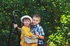Cheerful children gather berries in a basket in the orchard. Children in the garden harvest fruit stock image