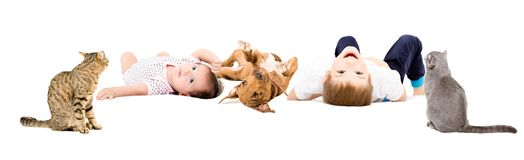 Cheerful children with a puppy and cats stock photography