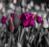 Cheerful, colorful background of plants. Abstraction in black and pink tones. Background from various plants. Flowers, tulips, branches, natural plants in a royalty free stock images