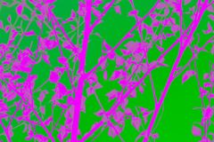 Cheerful, colorful background of plants. Abstraction in pink and  green tones. Background from various plants. Flowers, tulips, branches, natural plants in a royalty free stock photo