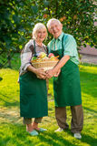 Cheerful couple holding apple basket. Old men and women smiling. Become a gardener Stock Images