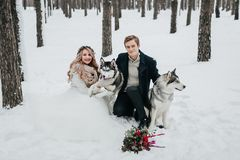 Cheerful couple are playing with siberian husky in snowy forest. Winter wedding Artwork. Copy space stock photography