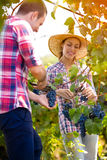 Cheerful couple in a vineyard stock images