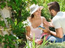 Cheerful couple working in garden Stock Images