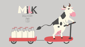 Cheerful cow delivers milk bottles on a scooter Royalty Free Stock Photos