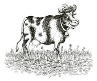 Cheerful cow (vector) Royalty Free Stock Images