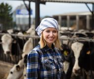 Cheerful cowgirl working with milking herd at cowhouse in farm. Positive Cheerful cowgirl working with milking herd at cowhouse in farm Royalty Free Stock Photo