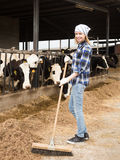 Cheerful cowgirl working with milking herd at cowhouse in farm Stock Image