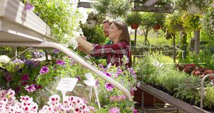 Cheerful coworking gardeners. Smiling woman and man working together and doing horticulture job with plants and flowers in sunny day stock footage