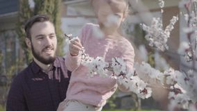 Portrait happy father holding his cute smiling daughter in his arms to make her sniffing the flowers of cherry blossoms. Cheerful daddy holding his cute smiling stock video